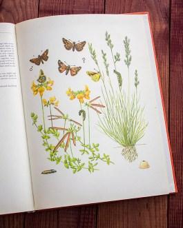 Бабочки. Иллюстрация из книги 1968 года. Артикул: tcbbic_pl062