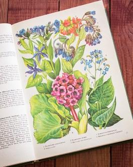 Садовые растения. Иллюстрация из книги 1960 года. Артикул: tibogf009