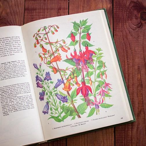 Садовые растения. Иллюстрация из книги 1960 года. Артикул: tibogf085