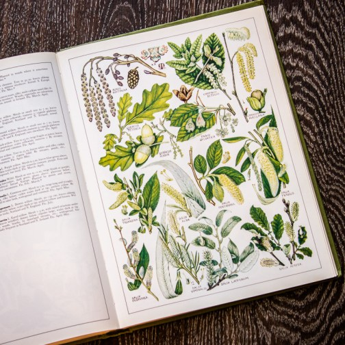 Растения Британии. Иллюстрация из книги 1982 года. Артикул: tncbf077
