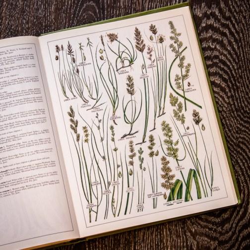 Растения Британии. Иллюстрация из книги 1982 года. Артикул: tncbf092