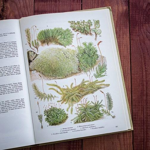 Мхи. Иллюстрация из книги 1979 года. Артикул: tobfp091