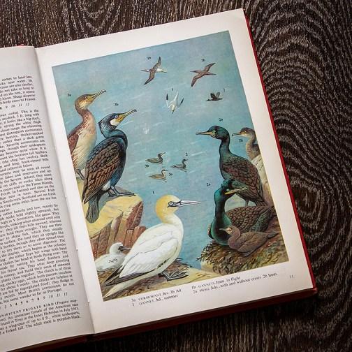 Птицы. Иллюстрация из книги 1973 года. Артикул: tobob006