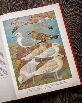 Птицы. Иллюстрация из книги 1973 года. Артикул: tobob045