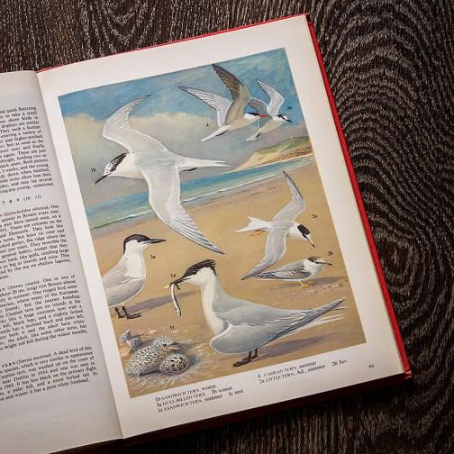 Птицы. Иллюстрация из книги 1973 года. Артикул: tobob050