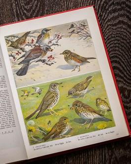 Птицы. Иллюстрация из книги 1973 года. Артикул: tobob069