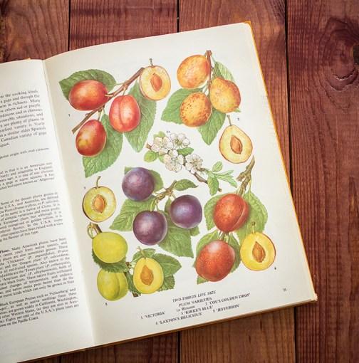 Сливы. Иллюстрация из книги 1971 года. Артикул: tobofp035
