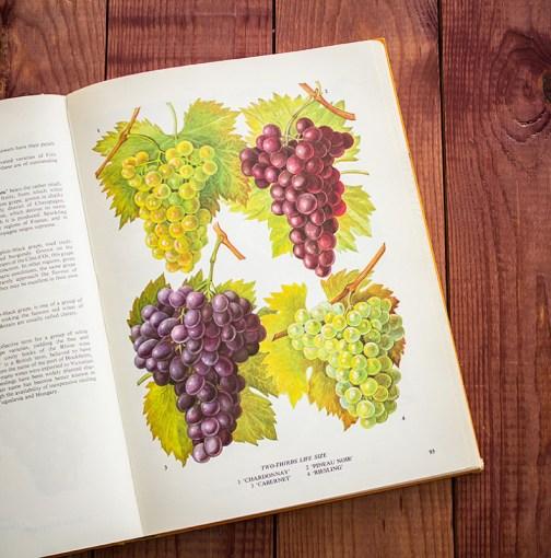Виноград. Иллюстрация из книги 1971 года. Артикул: tobofp046