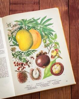 Манго. Иллюстрация из книги 1971 года. Артикул: tobofp050