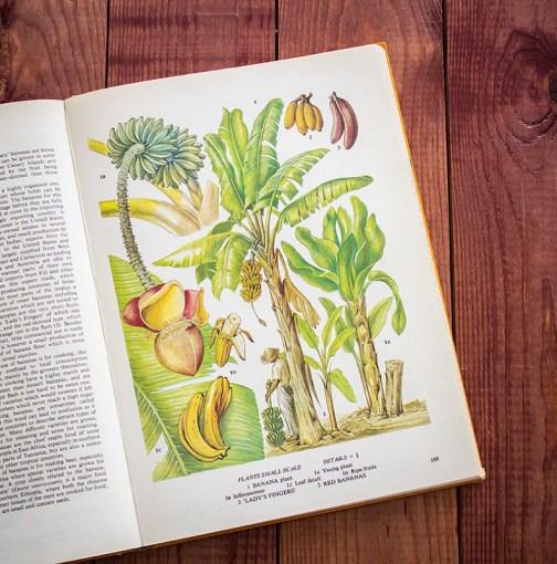Бананы. Иллюстрация из книги 1971 года. Артикул: tobofp054