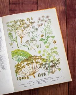 Пищевые растения. Иллюстрация из книги 1971 года. Артикул: tobofp069