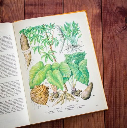 Корнеплоды. Иллюстрация из книги 1971 года. Артикул: tobofp090