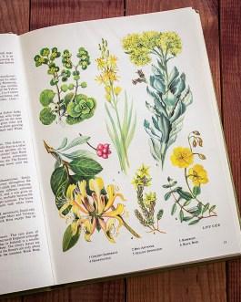 Полевые цветы. Иллюстрация из книги 1973 года. Артикул: tobowf007