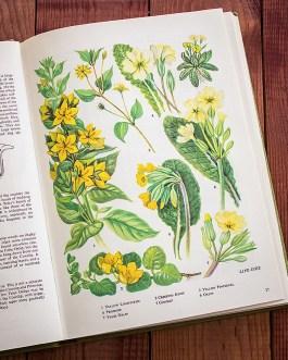 Полевые цветы. Иллюстрация из книги 1973 года. Артикул: tobowf013