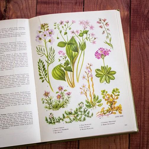 Полевые цветы. Иллюстрация из книги 1973 года. Артикул: tobowf056