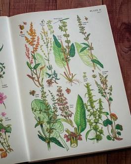 Цветы. Иллюстрация из книги 1977 года. Артикул: twfobane_pl006