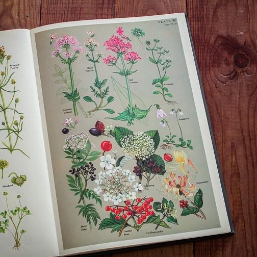 Цветы. Иллюстрация из книги 1977 года. Артикул: twfobane_pl048