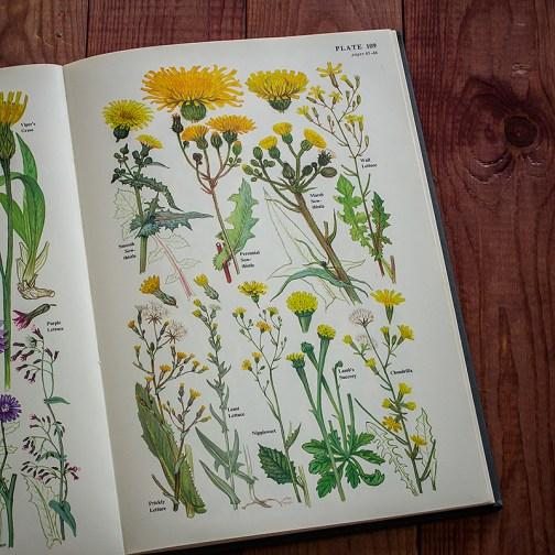 Цветы. Иллюстрация из книги 1977 года. Артикул: twfobane_pl055
