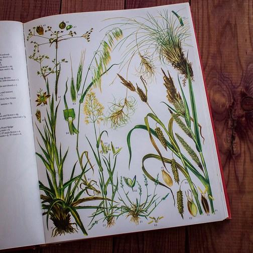 Дикие цветы. Иллюстрация из книги 1970 года. Артикул: wfw_pl025
