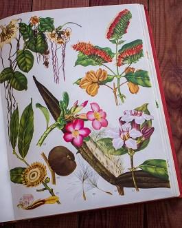 Дикие цветы. Иллюстрация из книги 1970 года. Артикул: wfw_pl061