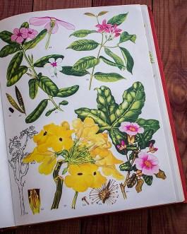 Дикие цветы. Иллюстрация из книги 1970 года. Артикул: wfw_pl071