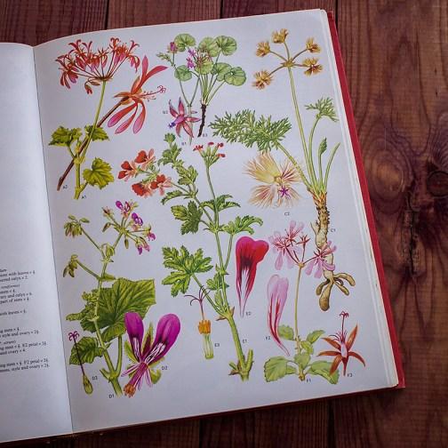 Дикие цветы. Иллюстрация из книги 1970 года. Артикул: wfw_pl074