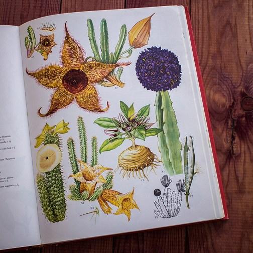Дикие цветы. Иллюстрация из книги 1970 года. Артикул: wfw_pl078
