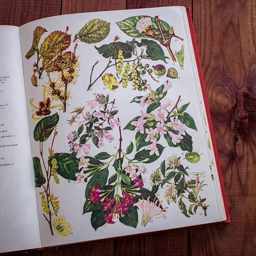 Дикие цветы. Иллюстрация из книги 1970 года. Артикул: wfw_pl094