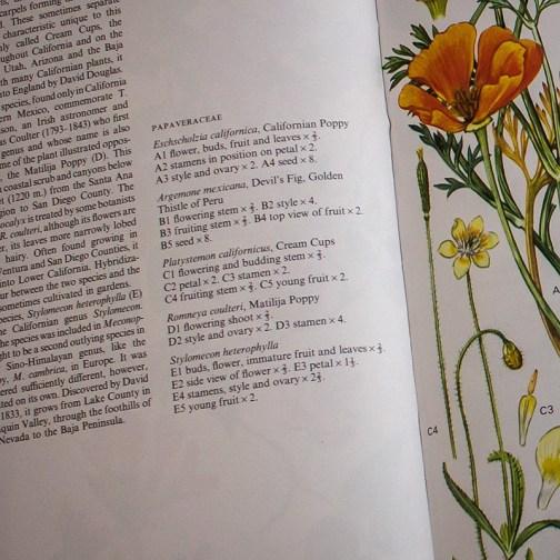 Ботаническая иллюстрация из книги 1970 года. Артикул: wfw_pl154