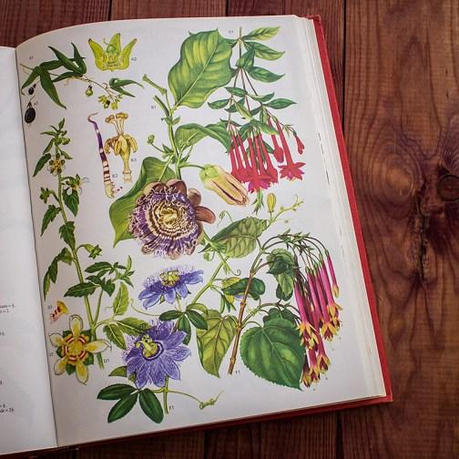 Дикие цветы. Иллюстрация из книги 1970 года. Артикул: wfw_pl173
