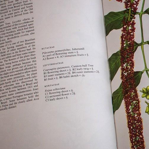 Ботаническая иллюстрация из книги 1970 года. Артикул: wfw_pl179