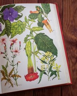 Дикие цветы. Иллюстрация из книги 1970 года. Артикул: wfw_pl183