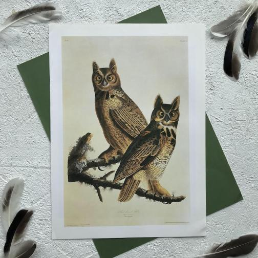 Иллюстрация с совами 1991 года.