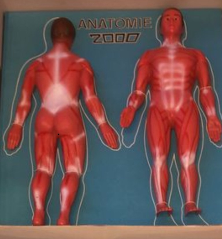 Anatomie 2000 muscles
