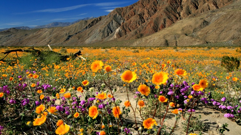 Desert Hot Springs California Highlights