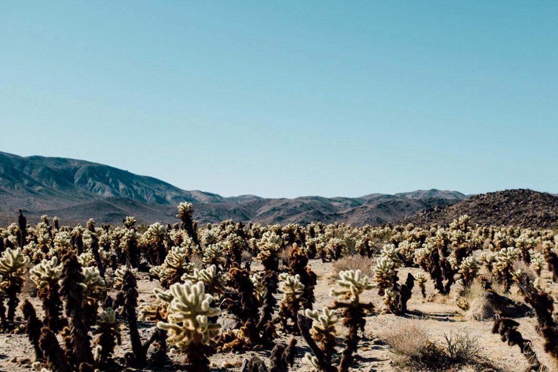 Thousand Palms California Highlights