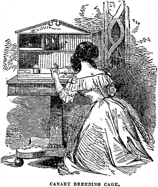 vgosn_vintage_illustration_girl_bird_cage