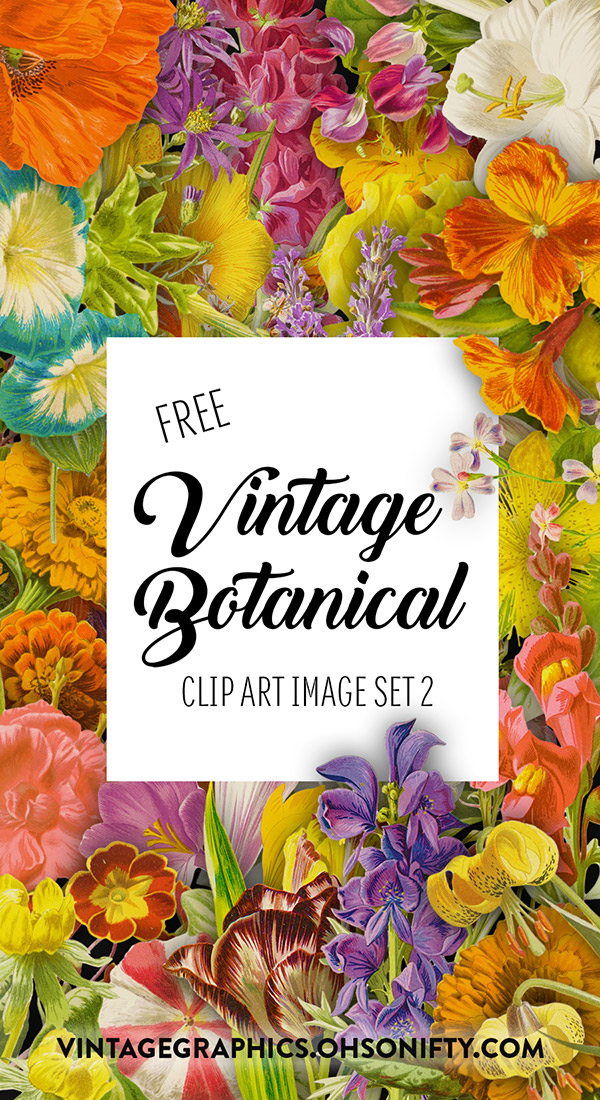 Royalty Free Images - Vintage Botanical Illustrations