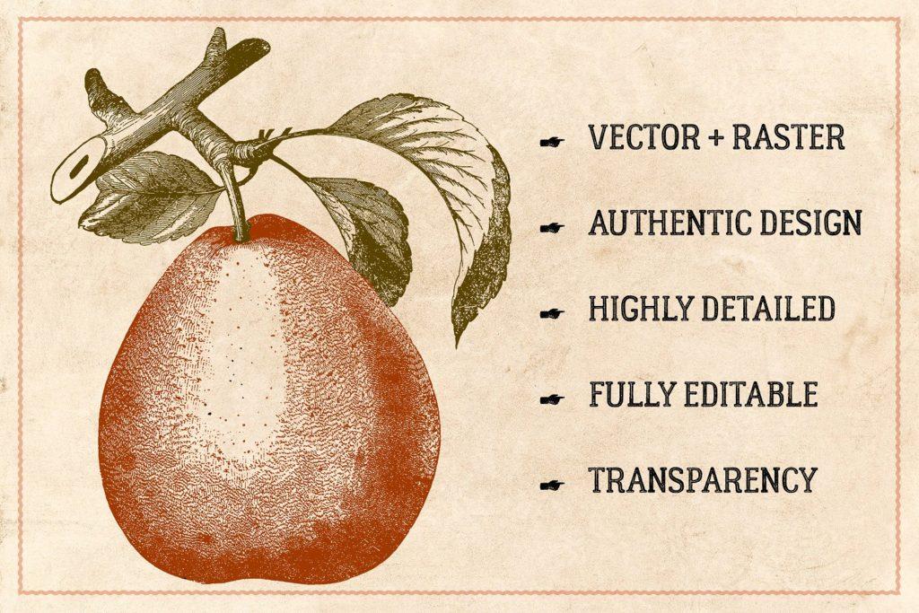 Vintage Fruit Stock Vectors & Clip Art