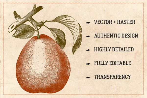 Vintage Fruit Stock Vectors & Clip Art
