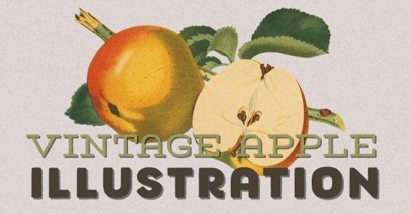 Vintage Apple Illustration