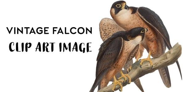 Vintage Falcon Illustration