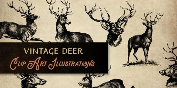 Fantastic Vintage Deer Clip Art Illustrations