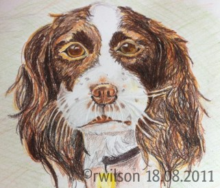 Woodie (pencil crayon)