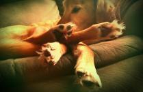 Labrador Foots