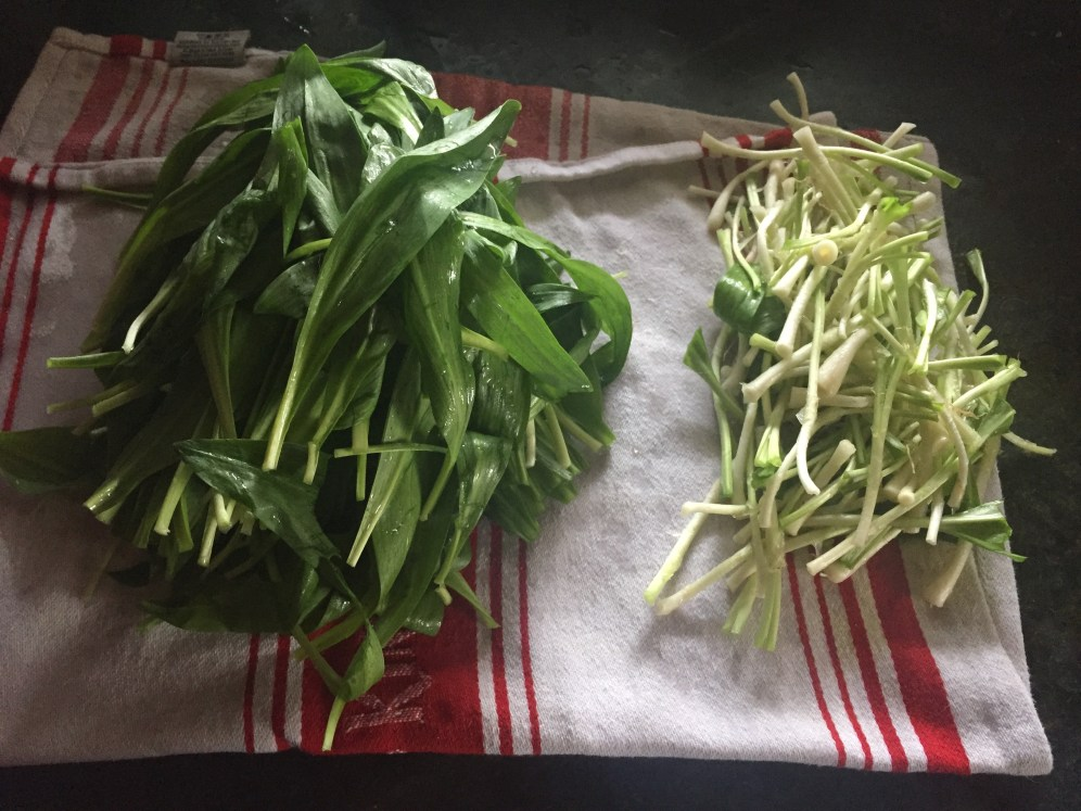 The leaves and stems cook at different rates so we are separating them here. This also allow you to blanch the leaves to keep their color.