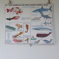 Affiche scolaire, Les animaux se déplacent dans l'eau, Les animaux se déplacent sur terre