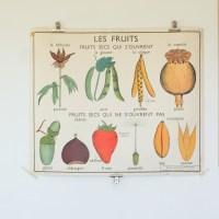 Affiche scolaire Rossignol 9&10 : Les fruits & La graine.