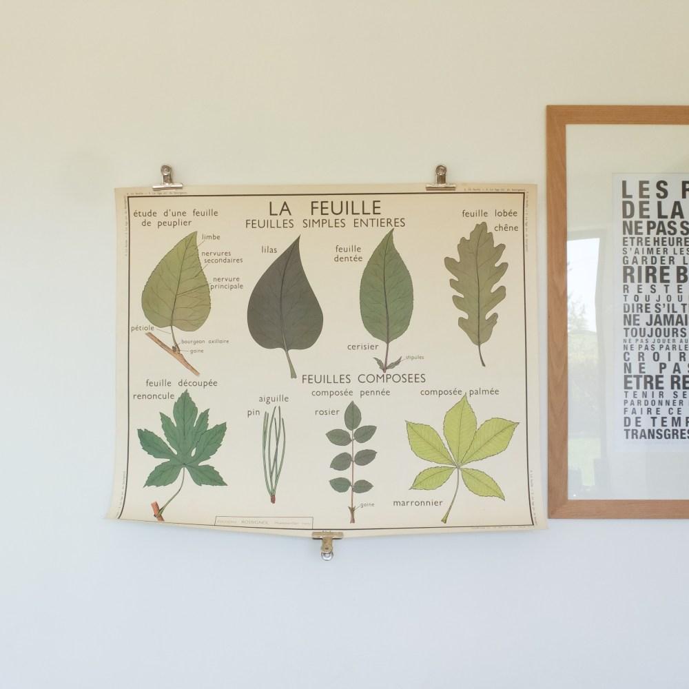 Affiche scolaire Rossignol 5&6: La feuille & La tige.