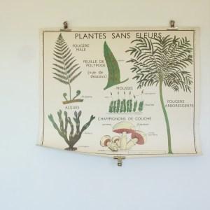 Affiche scolaire Rossignol 11 & 12: plantes sans fleurs & classification des végétaux.